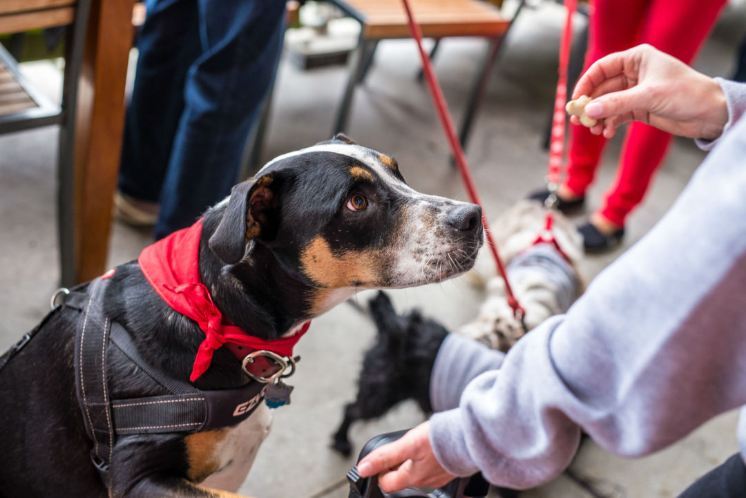 Feeding Service Dogs In Restaurants