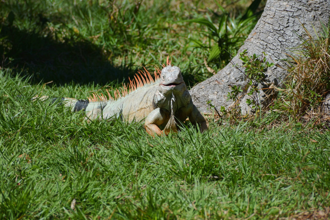 The Palm Beach Zoo Continues to be a Gem for Community · South ...